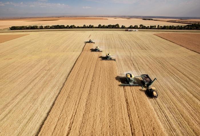 Il grano duro canadese migliore di quello siciliano? Falso: è solo un grande imbroglio al glifosato
