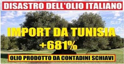 Crolla la produzione di olio d'oliva in Italia. Verremo invasi dall'olio tunisino spacciato per 'extra vergine italiano'?