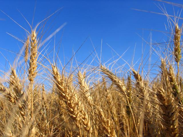 Gli industriali contro GranoSalus: togliete dal blog i risultati delle analisi sulla pasta