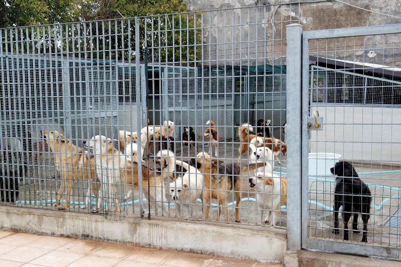 Cani randagi a Palermo: ricorso degli animalisti contro il Comune che punta di nuovo sugli affidamenti a pagamento