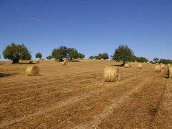 """Dieta mediterranea, per le multinazionali difenderla è una colpa: """"Accanita difesa del grano del Sud"""""""