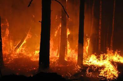 """Franco Busalacchi sugli incendi: """"Bloccare eventuali speculazioni sui terreni colpiti dal fuoco"""""""