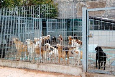 M5S e gestione dei cani randagi: le Asp di Agrigento e Caltanissetta violano la legge?