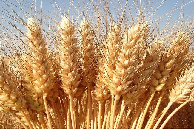 Sicilia: i controlli sul grano che arriva con le navi? Zero assoluto!
