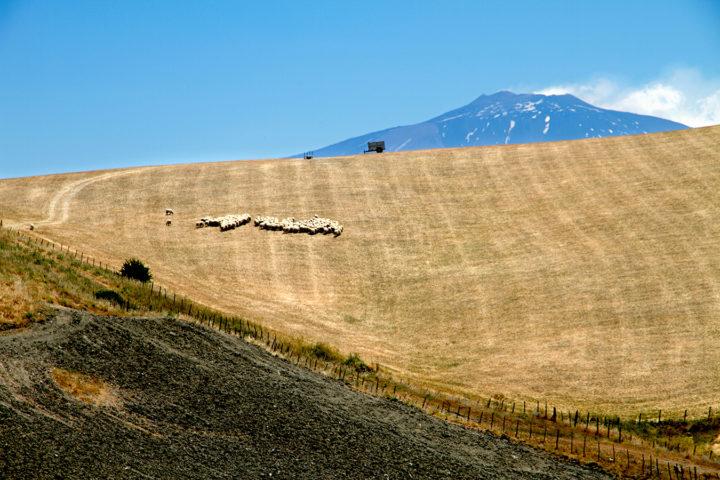 C'è una strategia per distruggere il grano siciliano e svendere le aree interne della nostra Isola? Inchiesta