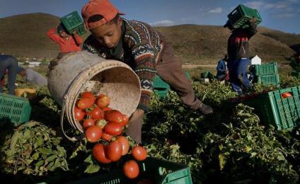 Quanta ipocrisia sui dodici migranti morti che lavoravano nei campi di pomodoro a Foggia!