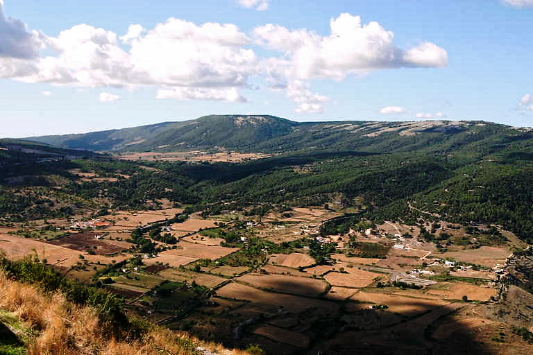 Il rilancio del grano nel Gargano, in Puglia, dopo le nostre battaglie contro le multinazionali dei cereali