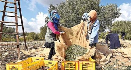 Ecco cosa deve fare il Sud Italia per riprendersi il mercato dell'olio d'oliva extra vergine 'rubato' dal Centro Nord Italia!