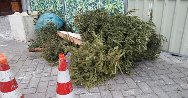Abandoned Christmas Tree 3