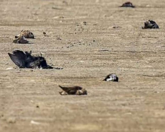 50 birds die in delhi officials look into avian flu angle 2021 01 08