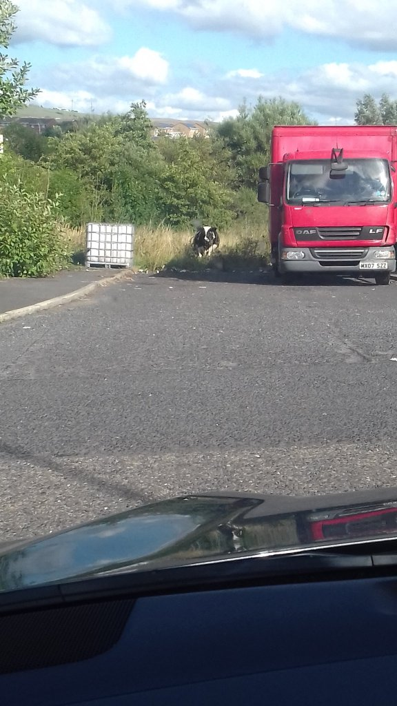 @stevengerrard03 - Burnley cow!!! #aberdeenfc #StandFree #COYR