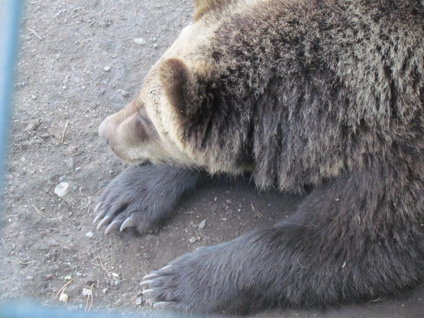 Sleeping bear, Skansen