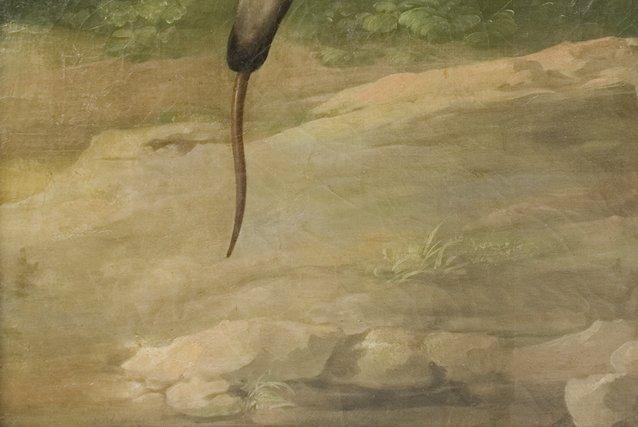 """Fig. 6a-Detalle del suelo en """"La Osa Hormiguera""""."""