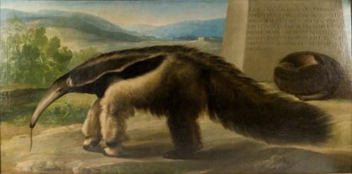 """Francisco de Goya: """"La Osa Hormiguera de S.M."""". Museo Nacional de Ciencias Naturales, Madrid."""