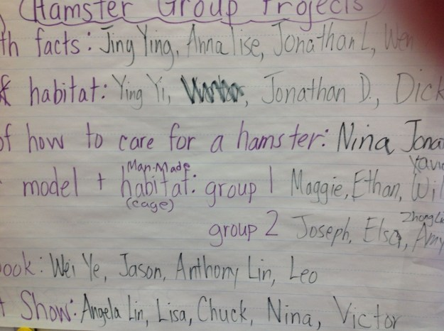 *hamster group projects