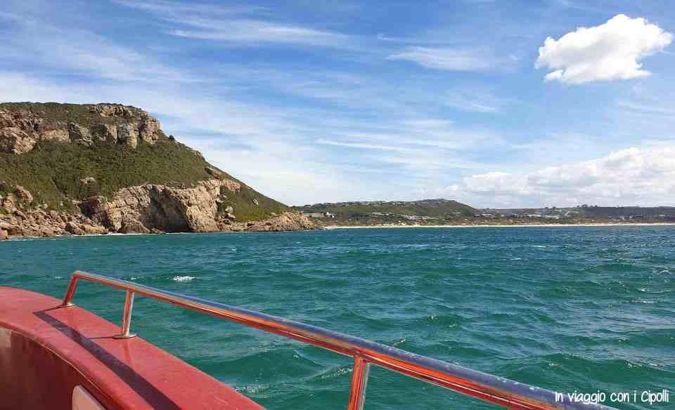 Crociera avvistamento balene in sudafrica