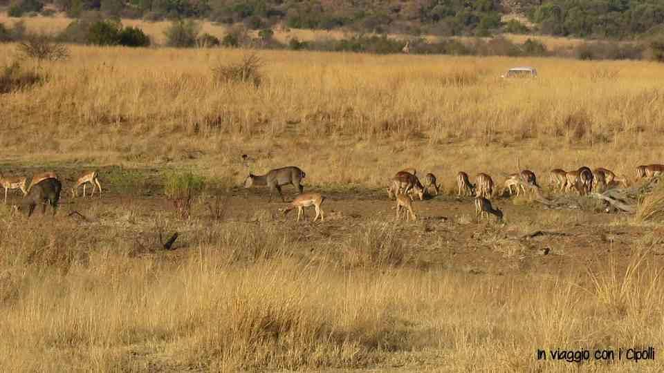 viaggio in sudafrica con i bambini