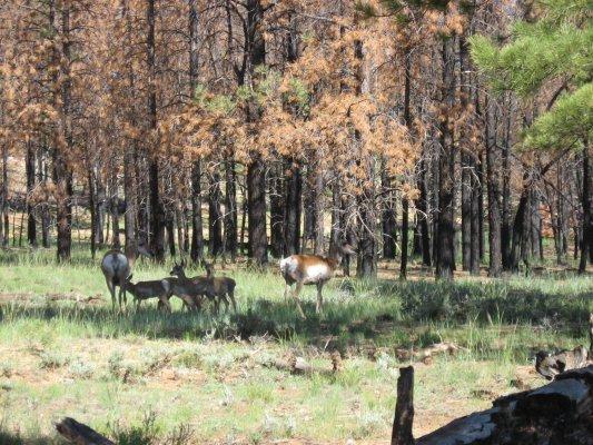Tour dei Parchi, piacevoli incontri nel Bryce Canyon NP (Utah, Stati Uniti)