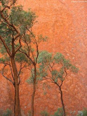 Viaggio in Australia, Mala Walk ad Uluru (Northern Territory)