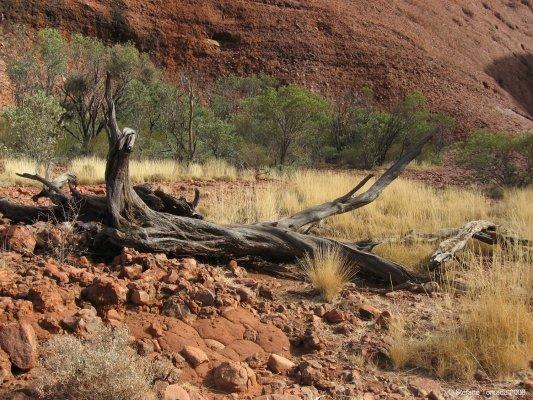 Viaggio in Australia, escursione lungo la Valley of the Winds Walk nei Monti Olgas (Northern Territory)