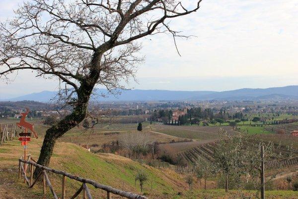 Viaggio in Friuli Venezia Giulia, punto panoramico lungo il sentiero delle Vigne Alte (Italia)