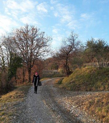 Viaggio in Friuli Venezia Giulia, il sentiero delle Vigne Alte all'uscita del bosco (Italia)