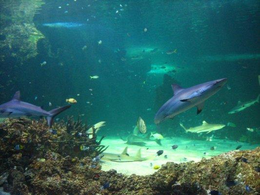 Acquario Sydney