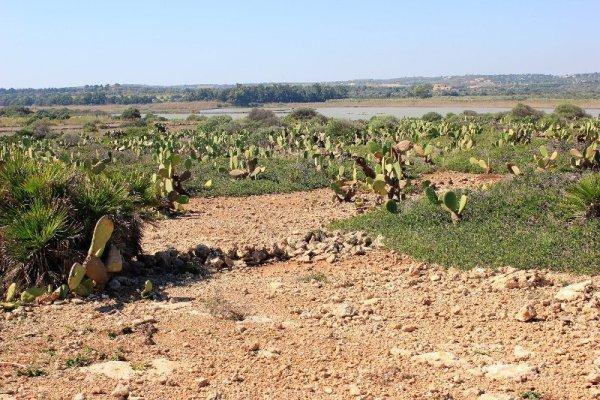 Cactus Riserva Vendicari