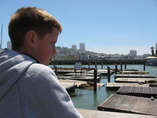 Leoni marini Pier 39 San Francisco