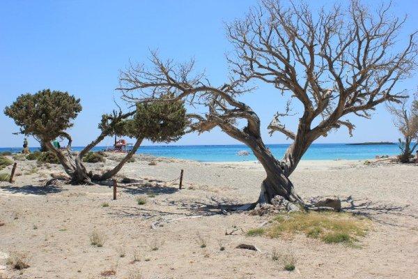 Spiaggia Elafonísi Creta