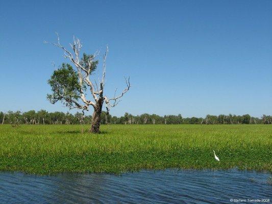Yellow Water Billabong Kakadu National Park