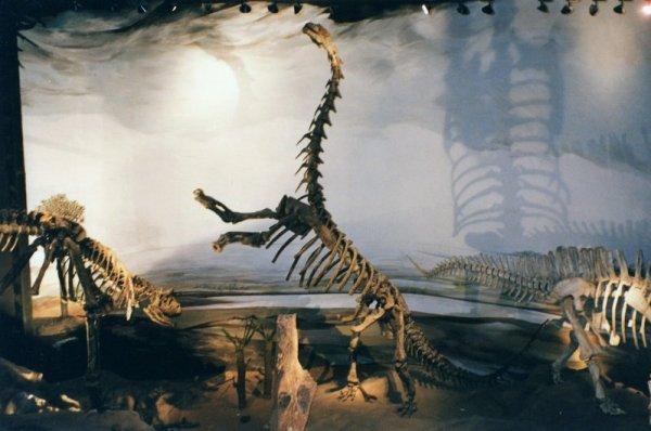 Museo paleontologico Egidio Feruglio Trelew Patagonia