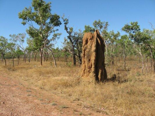 Termitaio Kakadu National Park Australia