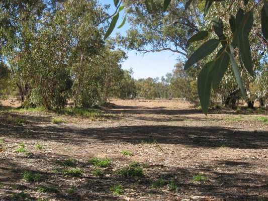 Todd River Alice Springs Australia