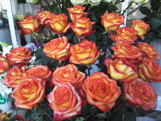 Mercato fiori Chişinău Moldova
