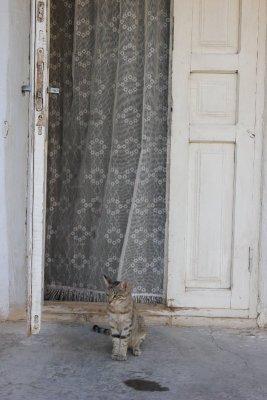 Gatto Khiva Uzbekistan