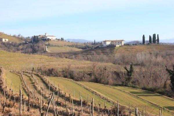 Paesaggio Colli Orientali Friuli
