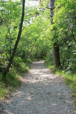 Sentiero Rilke nel bosco