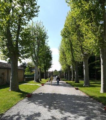 Viale accesso a Villa Dragoni Buttrio