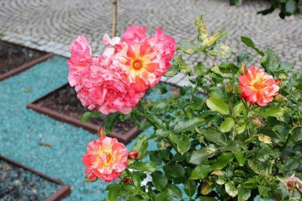 Giardino delle rose Villach Austria