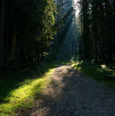 Un bosco nei dintorni di Pokljuka in Slovenia