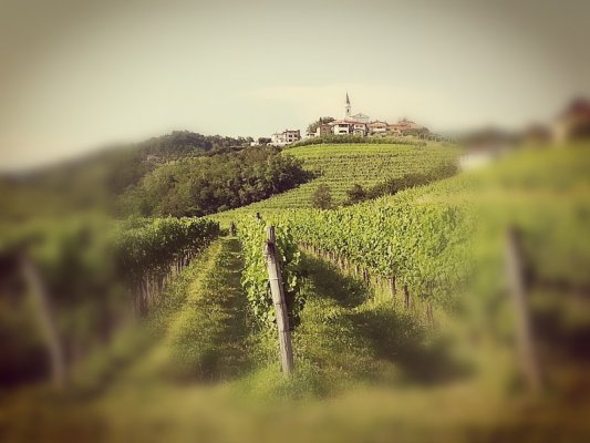 Uno splendido paesaggio del Brda in Slovenia