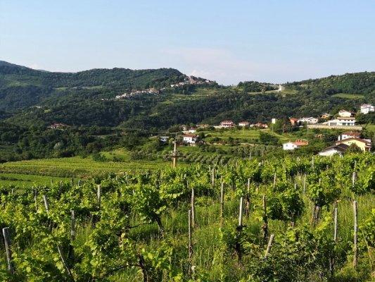 Il paesaggio collinare del Brda in Slovenia