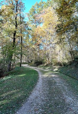 Un sentiero del Bosco Romagno