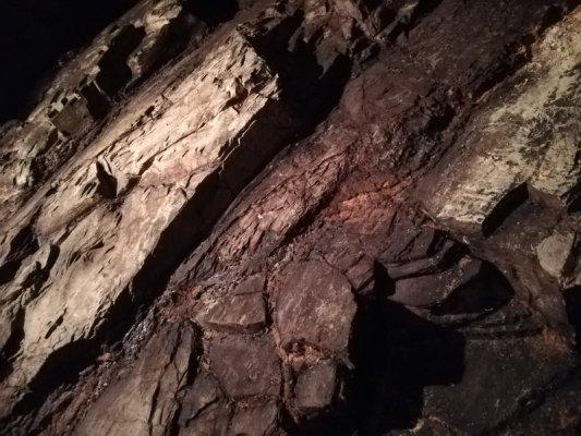 Scheletrato di galestro, terreno tipico del Chianti