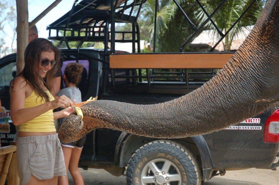 Koh Phangan Safari