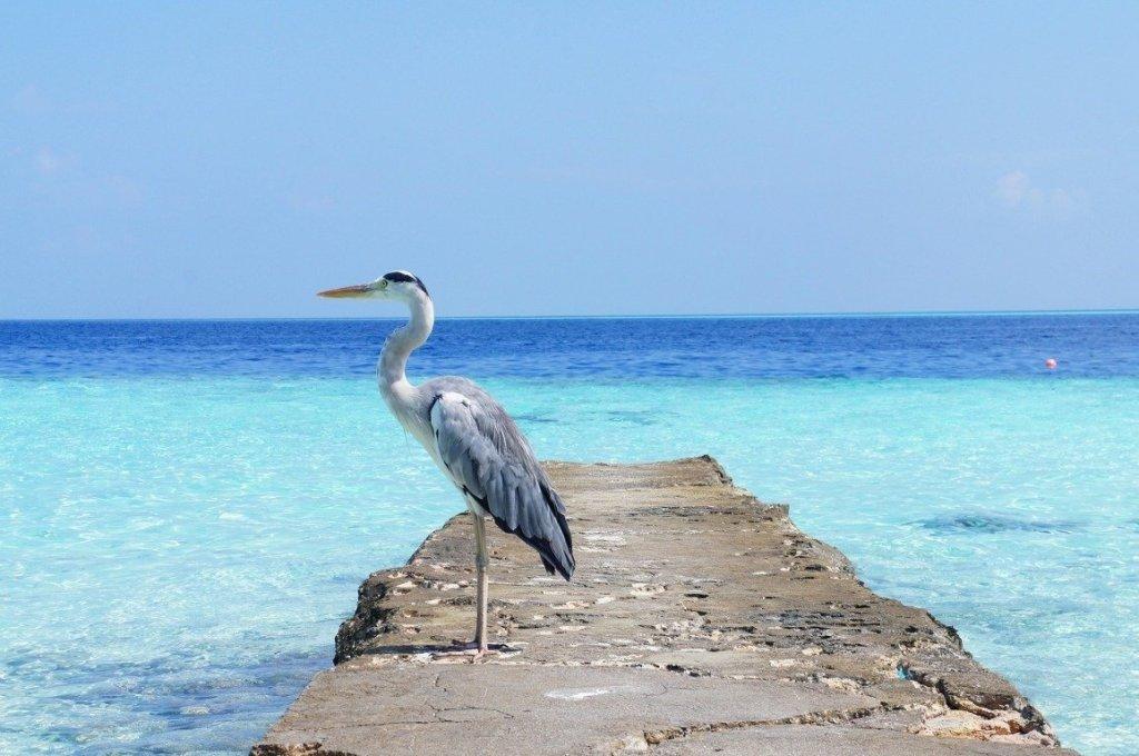 Heron Island Australia