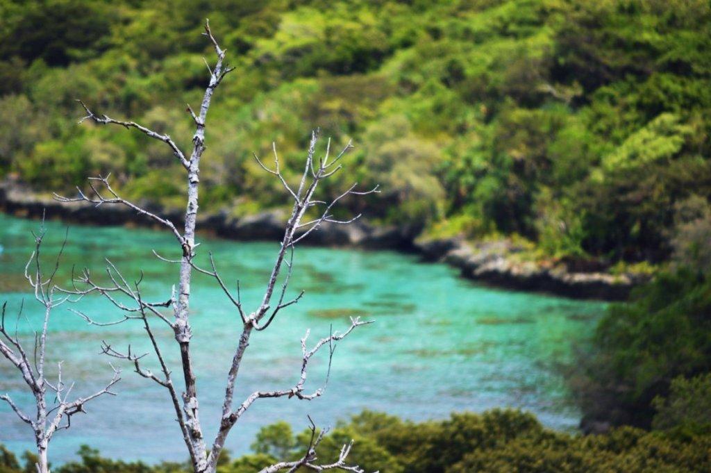 Cosa aspettarsi dalla Nuova Caledonia