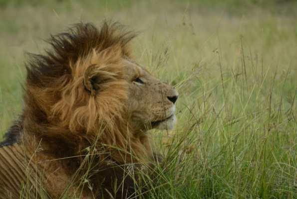 Dispatch From Kenya: Mara Plains Camp, Masai Mara