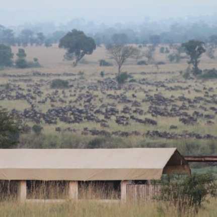 Just Checked Out: Singita Mara River Tented Camp, Tanzania